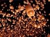 Maak een prachtig effect in de donkere nacht met de grote witte wensballonnen van Partyvuurwerk